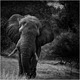 BIG FIVE 2 - Elephant