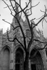 arbre cathedrale