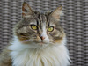 Portrait de chat ....